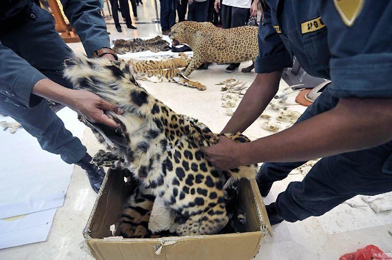 揭秘野生动物非法贸易路线图:网络非法交易逐增