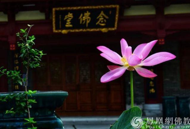 4位大德谈养生,原来这就是佛门高僧长寿之钥