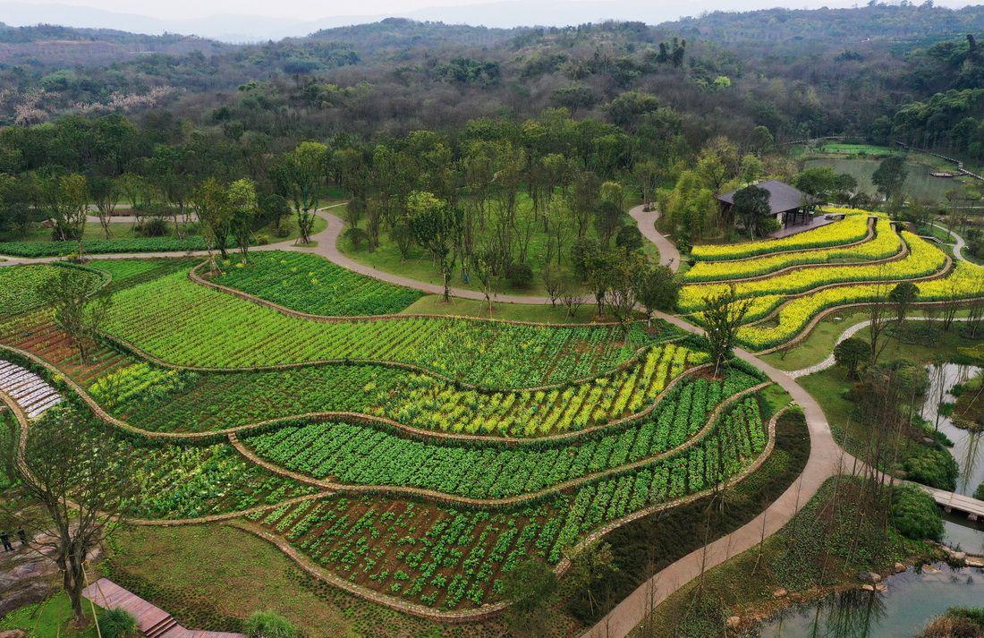 一座岛就这样回归自然——长江上游最大江心岛的生态变奏